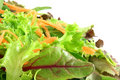 Fresh mixed lettuces, with carrots Stock Photography