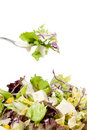 Fresh mixed salad on fork Royalty Free Stock Photography