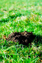 Fresh molehill green meadow garden Royalty Free Stock Image