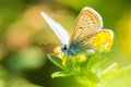 Fresh morning dew on a spring grass and butterfly, natural backg Royalty Free Stock Photo