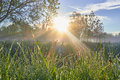 Fresh morning with sun rays and grass dew dawn trees Royalty Free Stock Photo