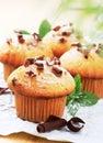 Fresh muffins Stock Photos