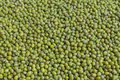 Fresh mung bean grams close up view Royalty Free Stock Photography
