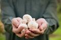Fresh mushrooms Royalty Free Stock Photo