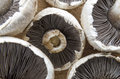 Fresh mushrooms picture of white Stock Images