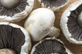 Fresh mushrooms picture of white Royalty Free Stock Photo
