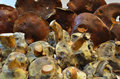 Fresh mushrooms pile of on the table Royalty Free Stock Photography