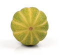 Fresh muskmelon on white background Stock Image