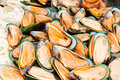 Fresh mussels at seafood market Royalty Free Stock Images