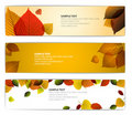 Fresh natural fall  horizontal banners with leafs Stock Image