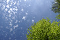 Fresh nature background green beech tree with blue sky and clouds Royalty Free Stock Images