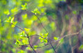 Fresh nature green young spring leaves background Stock Images
