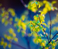 Fresh nature green young spring leaves background Stock Photo