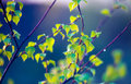 Fresh nature green young spring leaves background Stock Image