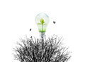 Fresh nature in light bulb and dry environment on white background green Stock Photography