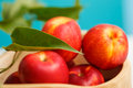 Fresh nectarines in the bowl Royalty Free Stock Photos