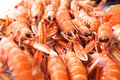 Fresh Norway lobsters close up. Soft focus. Royalty Free Stock Photo