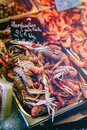 Fresh Norway lobsters at fish market Royalty Free Stock Photo