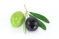 Fresh olive branch black and green olives on white background Royalty Free Stock Photography