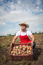 Fresh onion in the basket field Royalty Free Stock Image