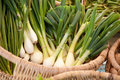 Fresh onions Royalty Free Stock Photo