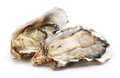 Fresh opened oyster Stock Images