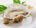 Fresh opened oyster oysters on a white plate selective focus Royalty Free Stock Image