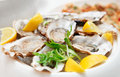Fresh opened oysters on restaurant table Stock Images