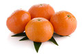 Fresh orange mandarins Royalty Free Stock Photography
