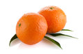 Fresh orange mandarins Stock Image