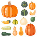 Fresh orange pumpkin decorative seasonal ripe food organic healthy vegetarian vegetable vector