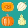 Fresh orange pumpkin decorative seasonal ripe food organic healthy vegetarian vegetable vector