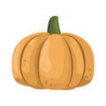 Fresh orange pumpkin vegetable isolated vector illustration.