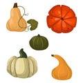 Fresh orange pumpkin vegetable vector illustration.