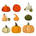 Fresh orange pumpkin vegetable vector illustration.