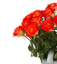 Fresh orange roses close up isolated on white background Stock Images