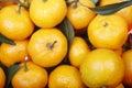 Fresh oranges. Royalty Free Stock Photos