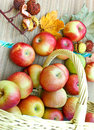 Fresh organic apples in a wicker basket Royalty Free Stock Image