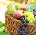 Fresh organic autumn fruits in wicker basket Royalty Free Stock Photos