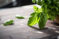 Fresh organic basil Royalty Free Stock Photo