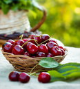 Fresh organic cherries close up Royalty Free Stock Photos
