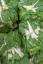 Fresh organic collard greens Stock Images