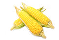 Fresh organic corn Royalty Free Stock Photo