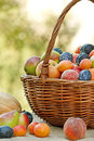 Fresh organic fruits in wicker basket is full of varied and fruit Stock Photo
