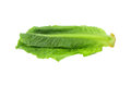 fresh organic green cos lettuce or romaine lettuce isolated on w Royalty Free Stock Photo