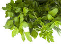 Fresh organic herbs Royalty Free Stock Photography
