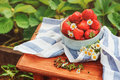 Fresh organic home growth strawberries on wooden table in plate Royalty Free Stock Photo