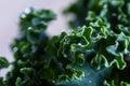 Fresh organic kale