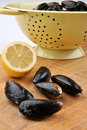 Fresh organic mussel and on a timber board Stock Photo