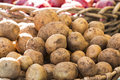 Fresh organic potatoes from farmer's market Royalty Free Stock Photo